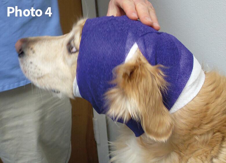Ear Wrapping Groomer To Groomer Pet Grooming News