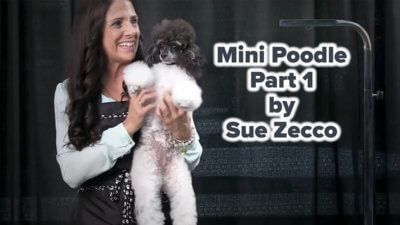 Mini Poodle Part 1 by Sue Zecco