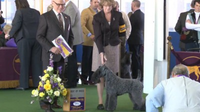 The Westminster Kennel Club   Videos
