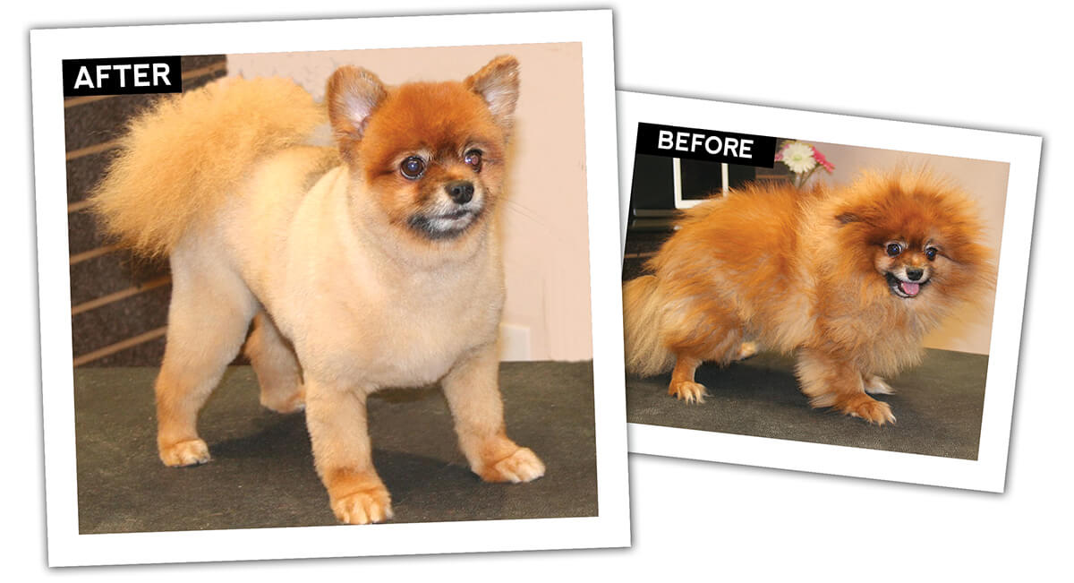 how to use zorb without groomer