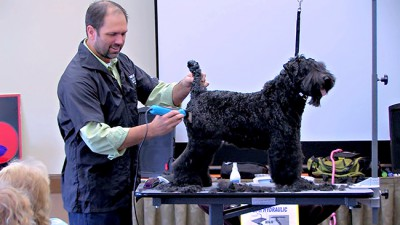 Quick Tips Videos Groomer To Groomer Pet Grooming News