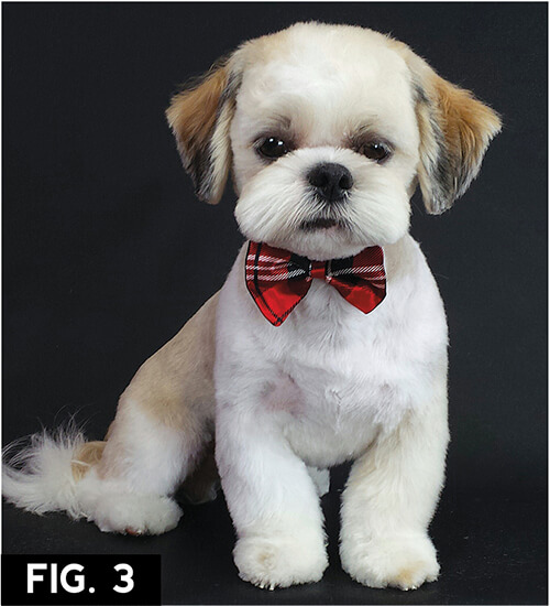 shih tzu haircuts asian freestyle groomer to groomer pet grooming news 3520