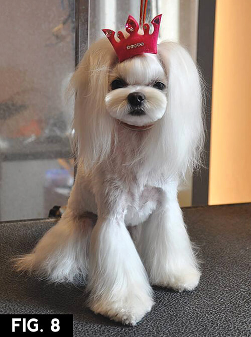 Most Inspiring Shih Tzu Anime Adorable Dog - asian9  Image_85463  .jpg