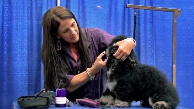Grooming Demo Videos Groomer To Groomer Pet Grooming News