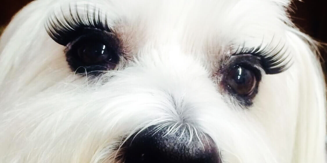 Batting Those Eyelashes Groomer To Groomer Pet Grooming News Stories And Videos