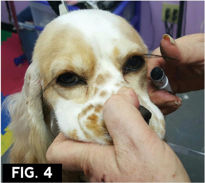 Batting Those Eyelashes Groomer To Groomer Pet Grooming News