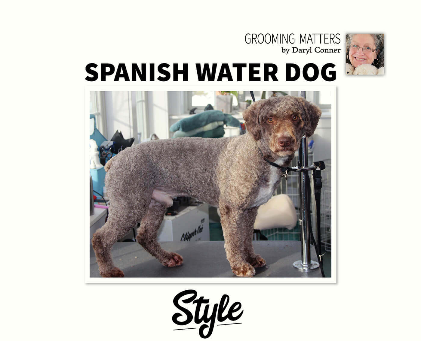 Spanish Water Dog Style Groomer To Groomer Pet Grooming News