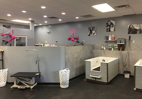 Self service is it for you groomer to groomer pet grooming we have six fully equipped selfservice stations and a grooming area for myself and my other groomer miranda our fee for selfservice is 20 solutioingenieria Gallery