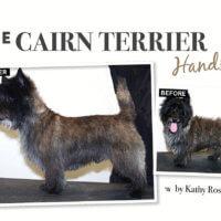 the cairn terrier handstrip article