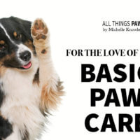 basic paw care