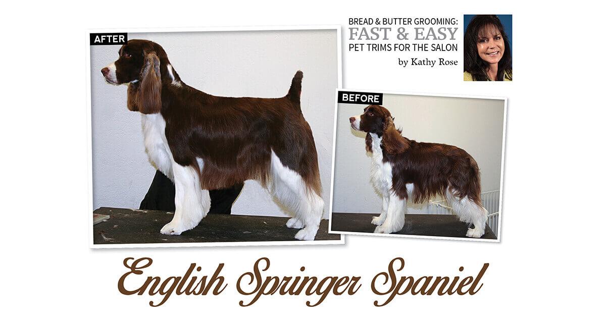 English Springer Spaniel Groomer To Groomer Magazine