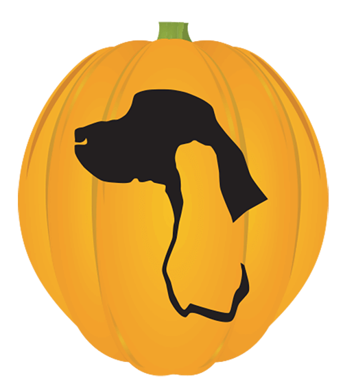 Sporting Breed Pumpkin
