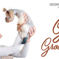 The Gifts of Grooming