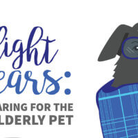 The Twilight Years: Caring For The Elderly Pet