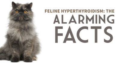 Feline Hyperthyroidism: The Alarming Facts
