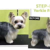 Step-By-Step Yorkie Fusion Trim
