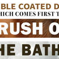Double Coated Dogs: Which Comes First the Brush or the Bath?
