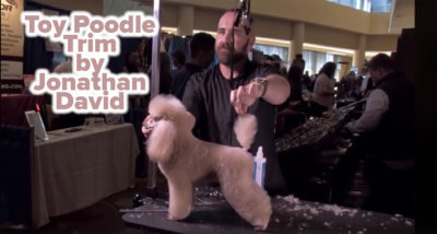 Toy Poodle Trim by Jonathan David