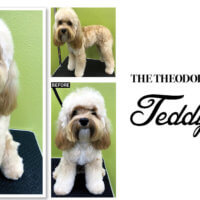 The Theodore: An Updated Teddy Trim