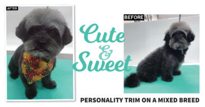 Cute & Sweet: Personality Trim on a Mixed Breed