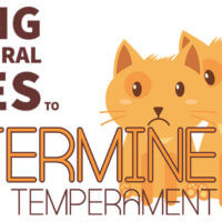 Using Behavioral Cues to Determine Feline Temperament